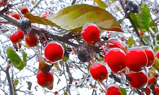 Frozen Berries Color